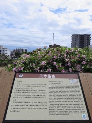 IMG_9769 浜松城