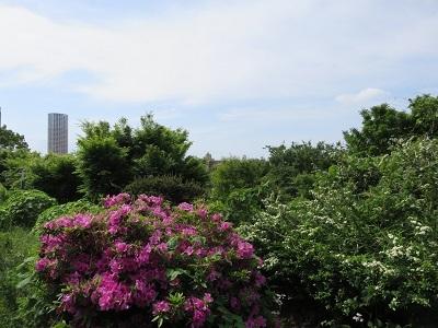 IMG_0346 西郷山公園