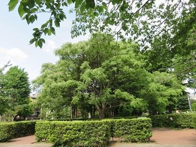 IMG_0364 菅刈公園