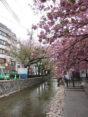 IMG_8144 高瀬川