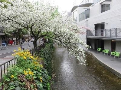 IMG_8156 高瀬川