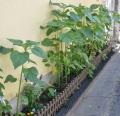 柵と花壇2