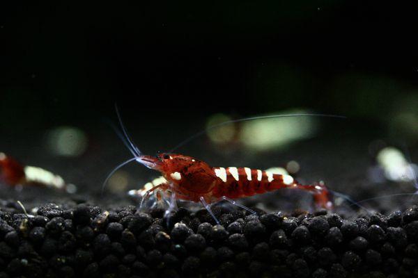 shrimp cafe_0851
