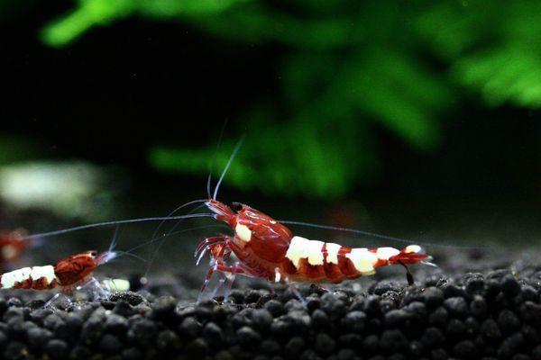 shrimp cafe_0852