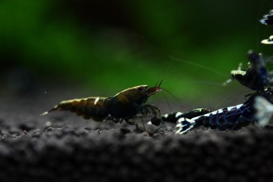 shrimp cafe_1266