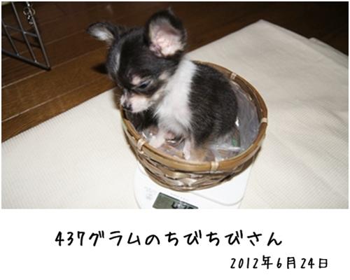 風ちゃんのお迎え記念日