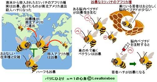 おとなしいミツバチを凶暴にするものはdownsize