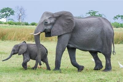 elephant-2923916_640-1.jpg