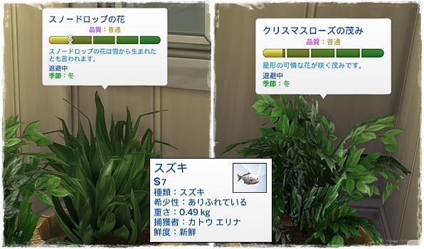 Sea_K6-13.jpg