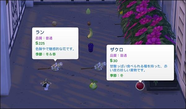 Sea_K9-7.jpg