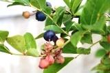 植物 (6)