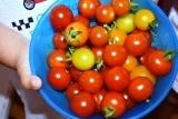 収穫 (3)