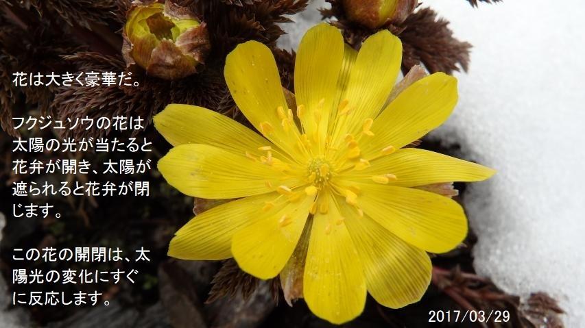 2017年3月29日徳島県西部の三好市東祖谷山の寒峰(標高1605m)にて