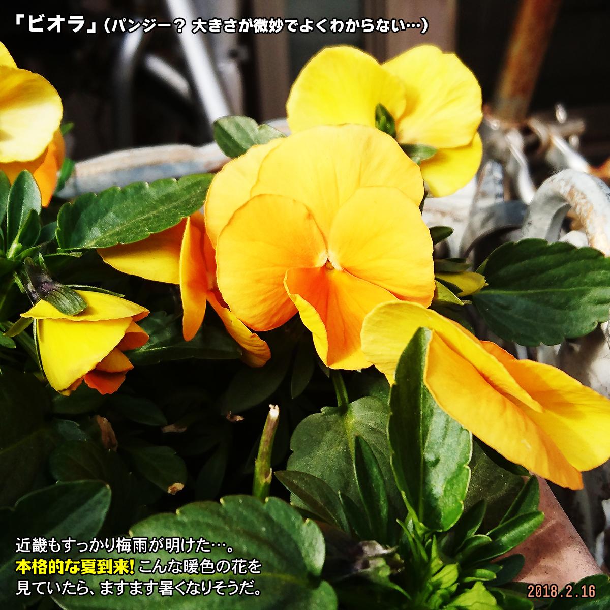 DSC_5836.jpg