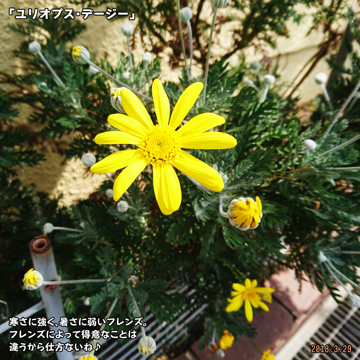 DSC_6535-1.jpg