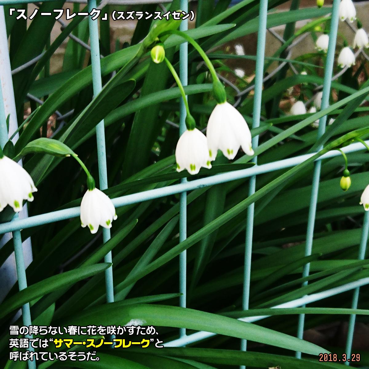 DSC_6565-1.jpg