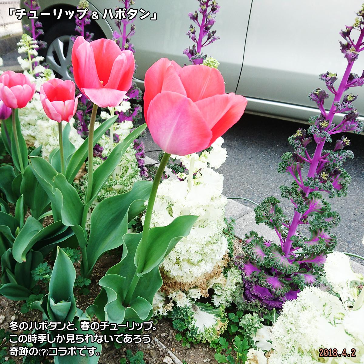 DSC_6713.jpg