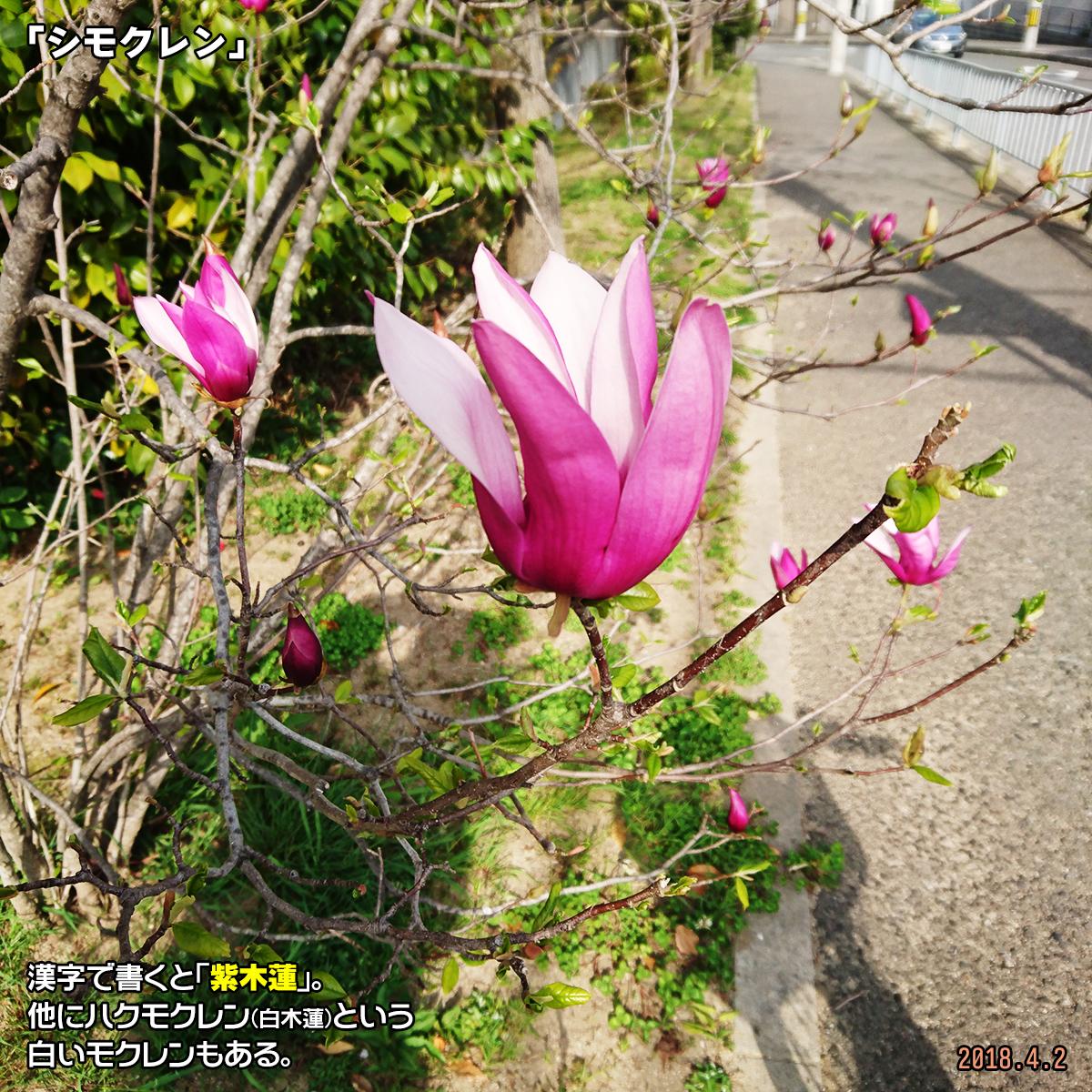 DSC_6759-1.jpg
