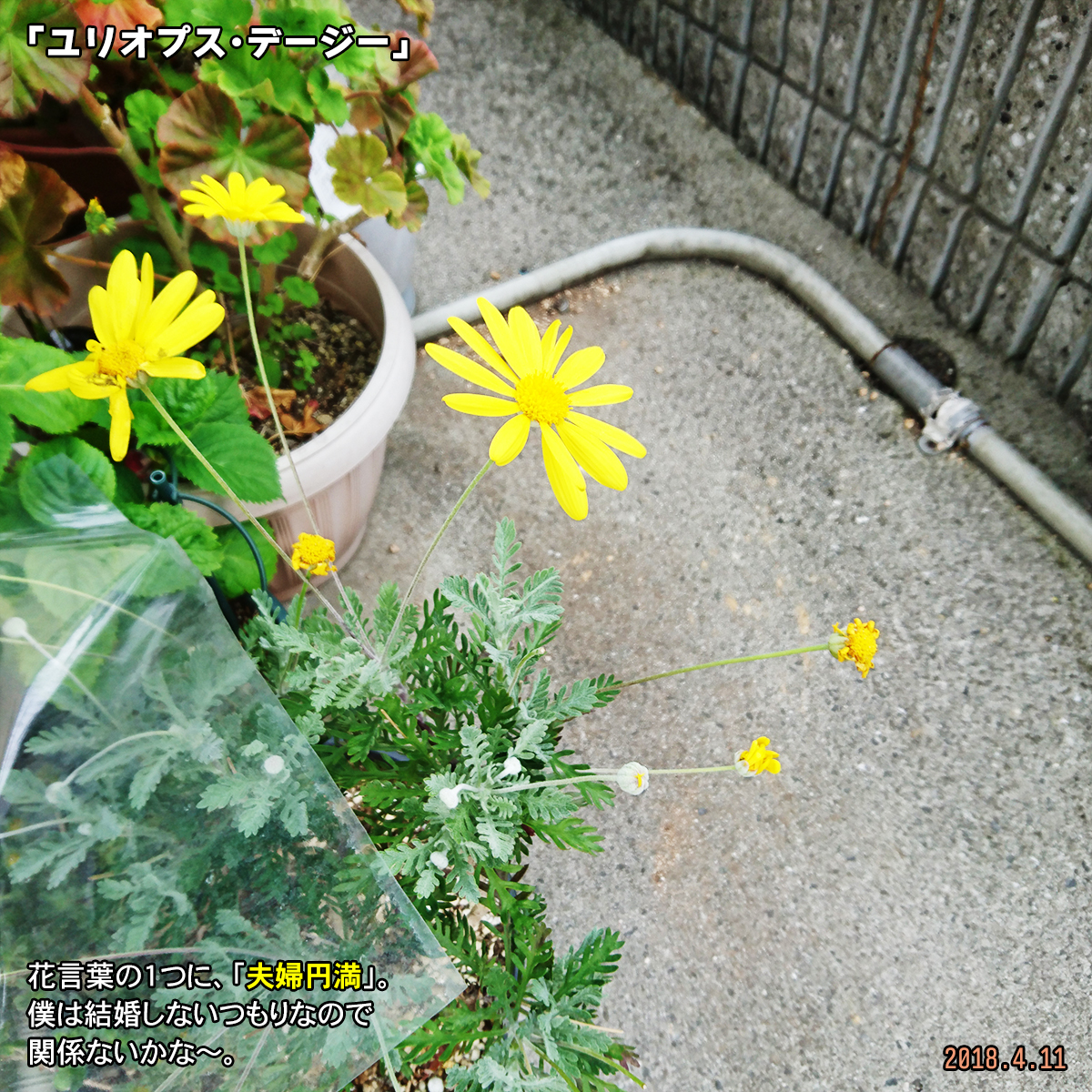 DSC_6893.jpg