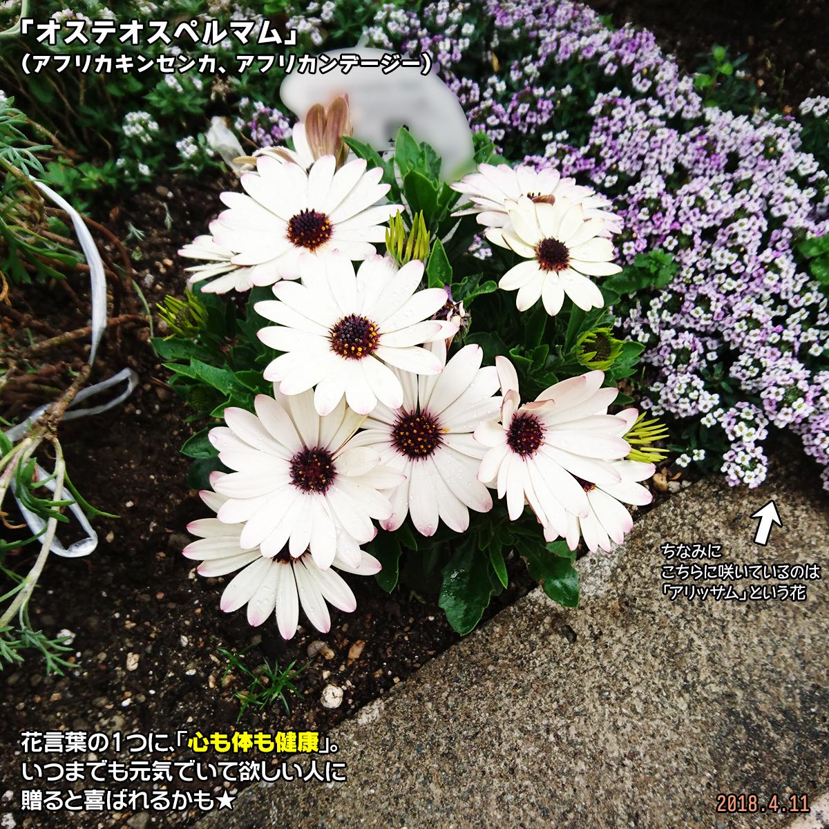 DSC_6910.jpg