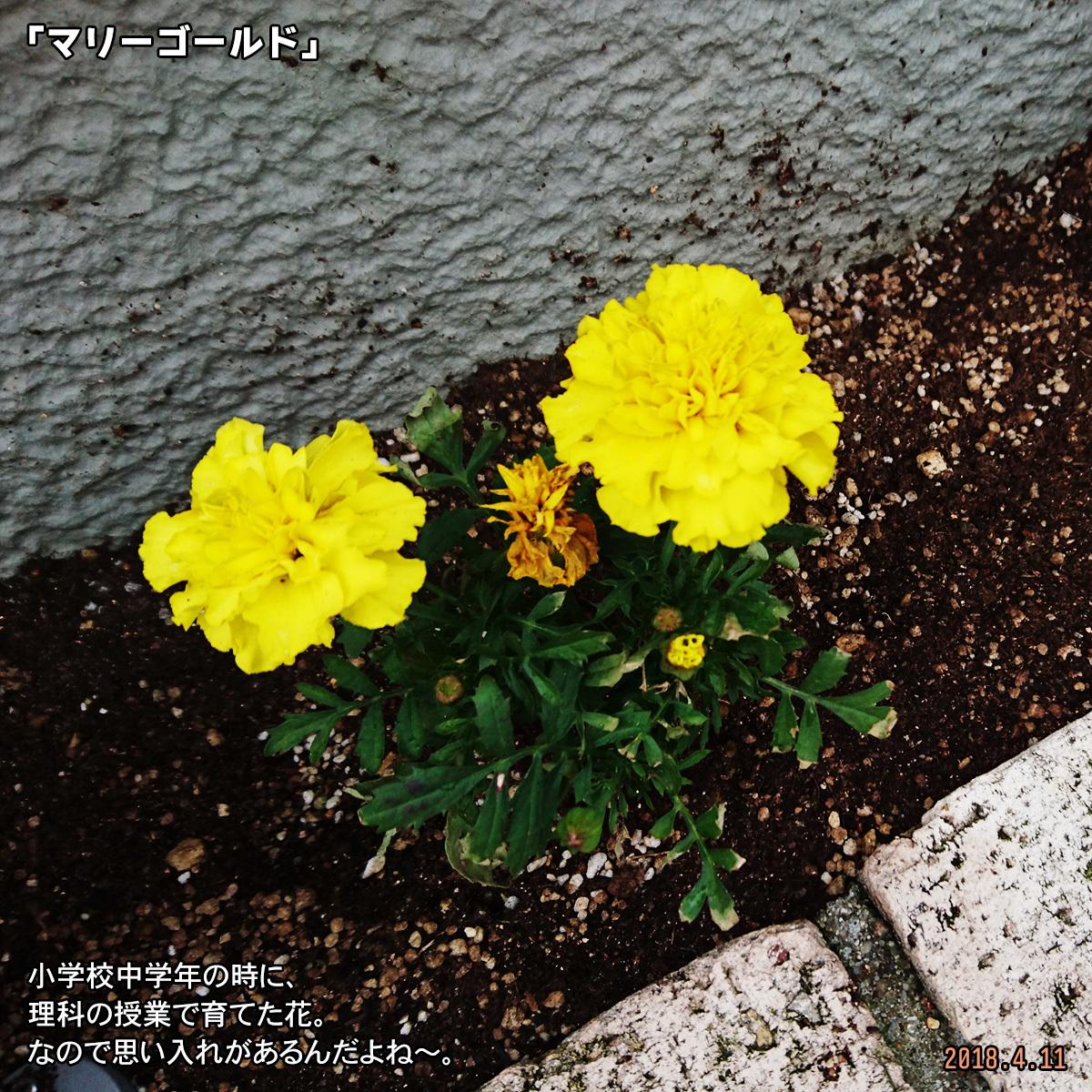 DSC_6923.jpg