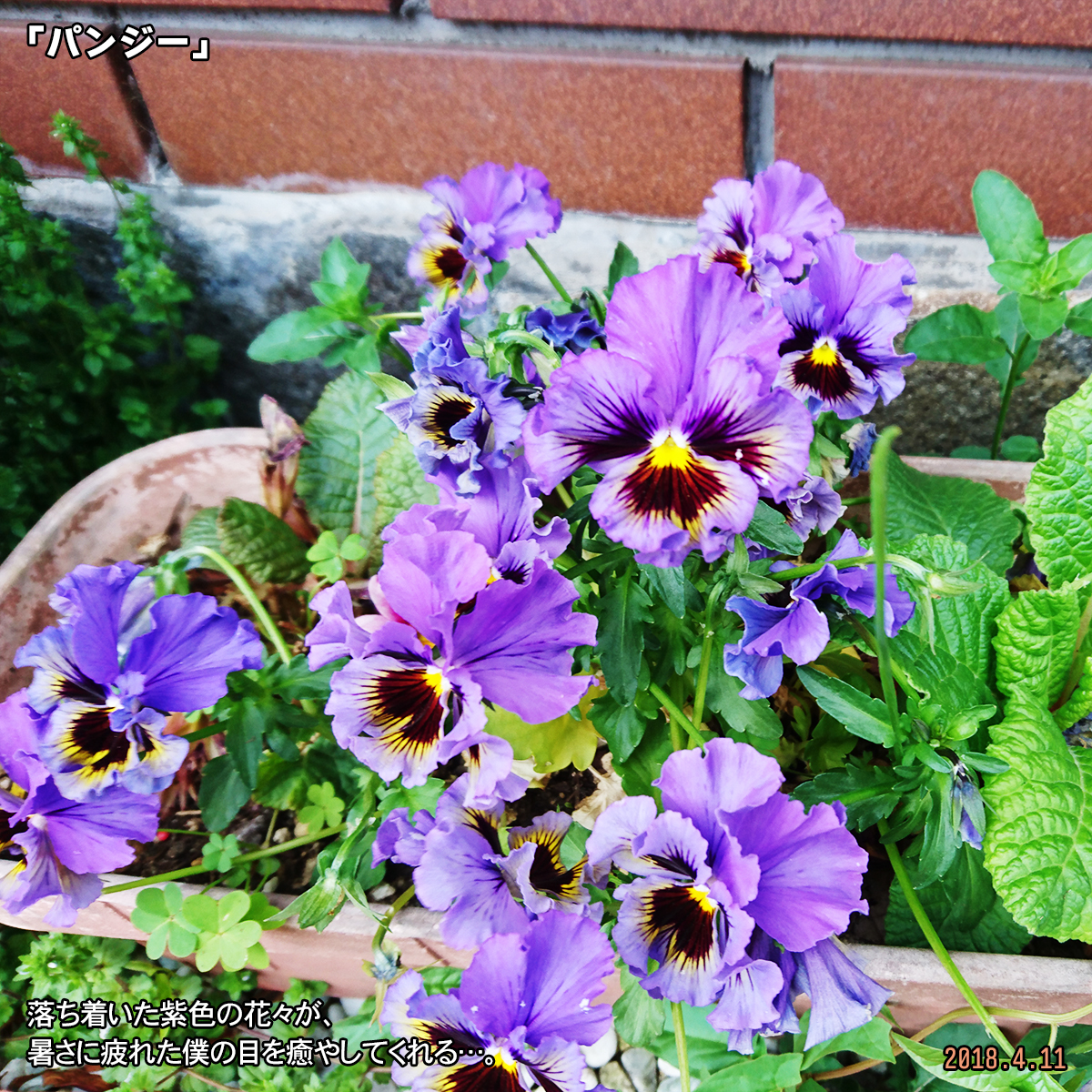 DSC_6930.jpg