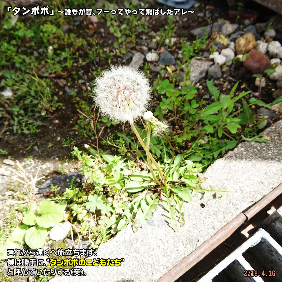 DSC_7022.jpg