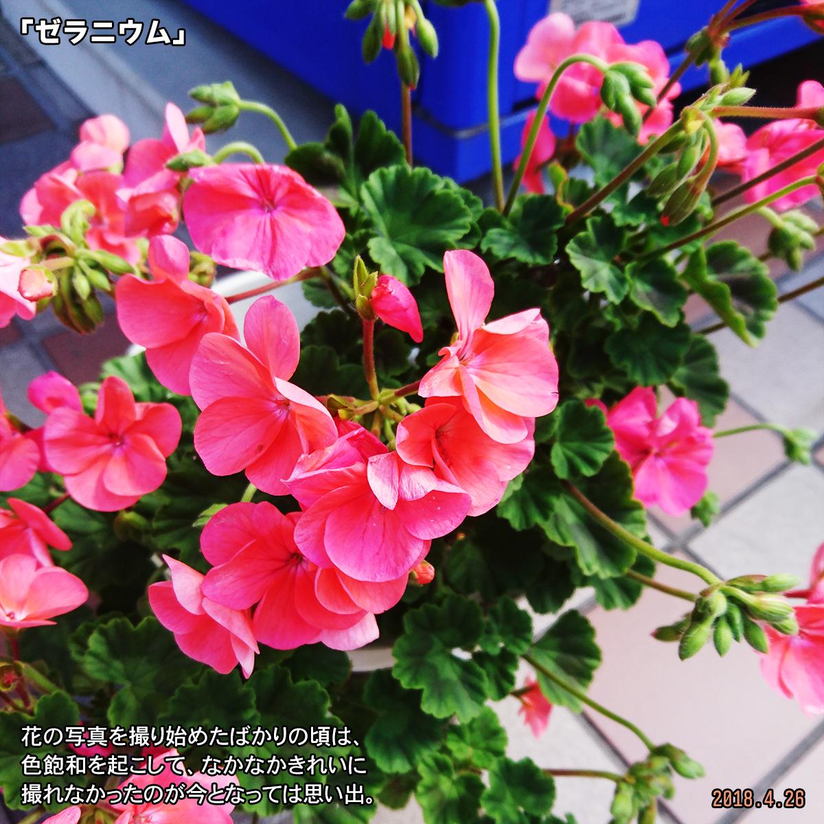 DSC_7147.jpg