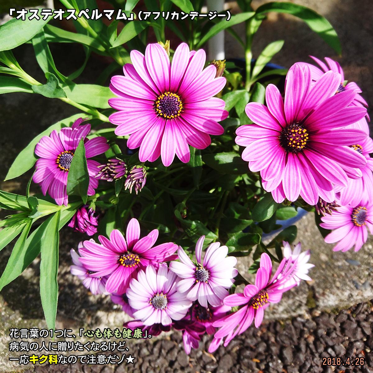 DSC_7151_20180702181000155.jpg