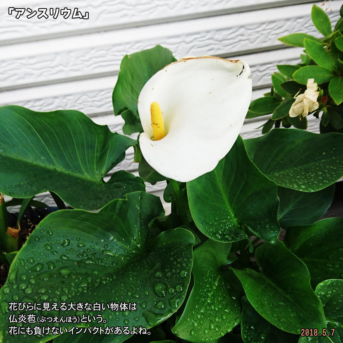 DSC_7242.jpg