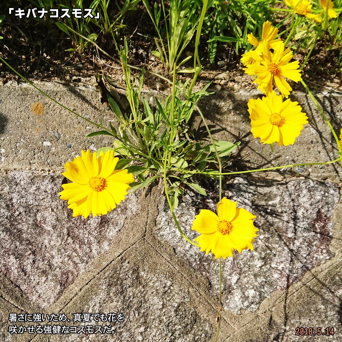 DSC_7320-1.jpg