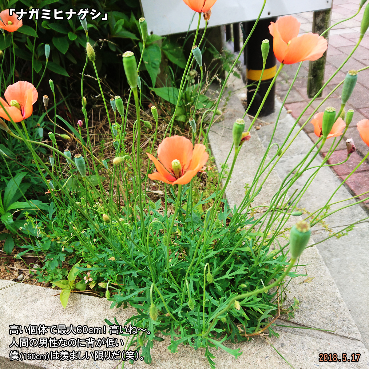 DSC_7360-2.jpg