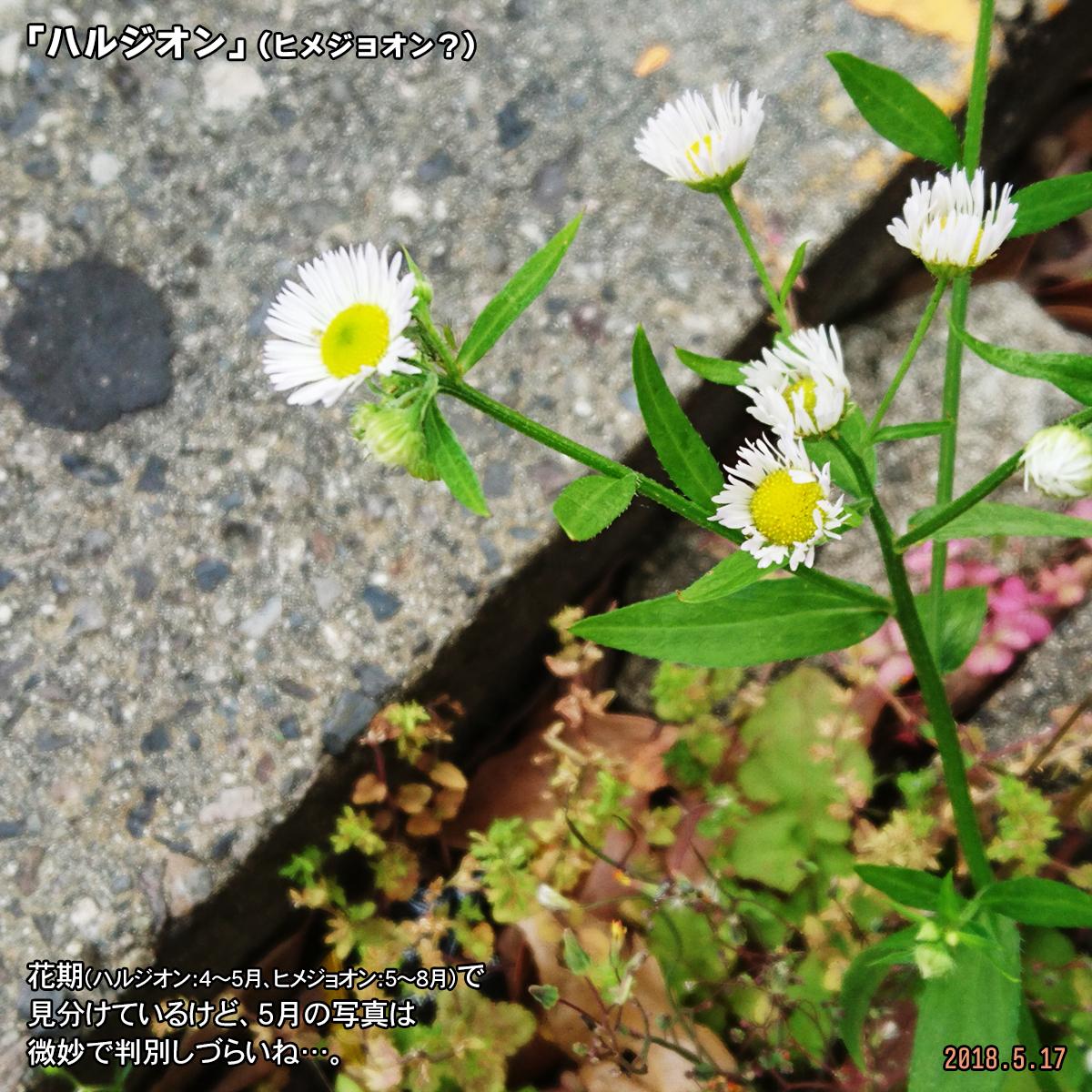 DSC_7362.jpg