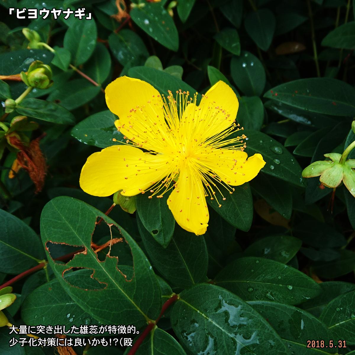 DSC_7505.jpg