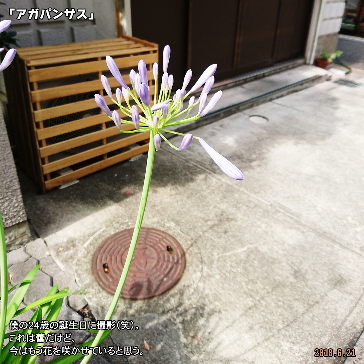 DSC_7589.jpg