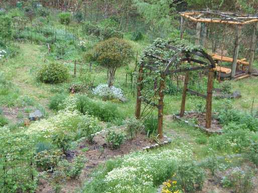 20180406 4月の庭