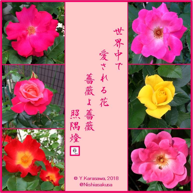 180617薔薇各種LRG