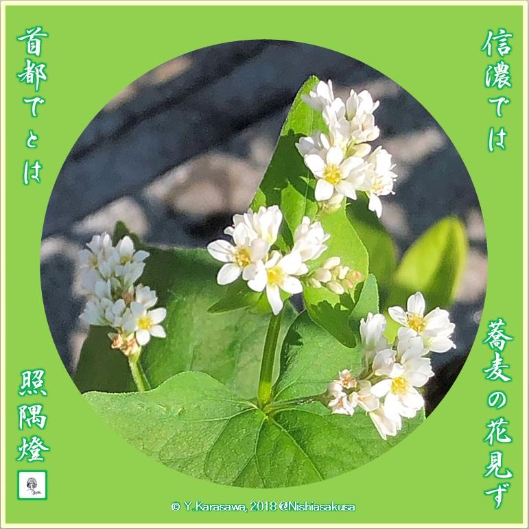 180623蕎麦の花LRG