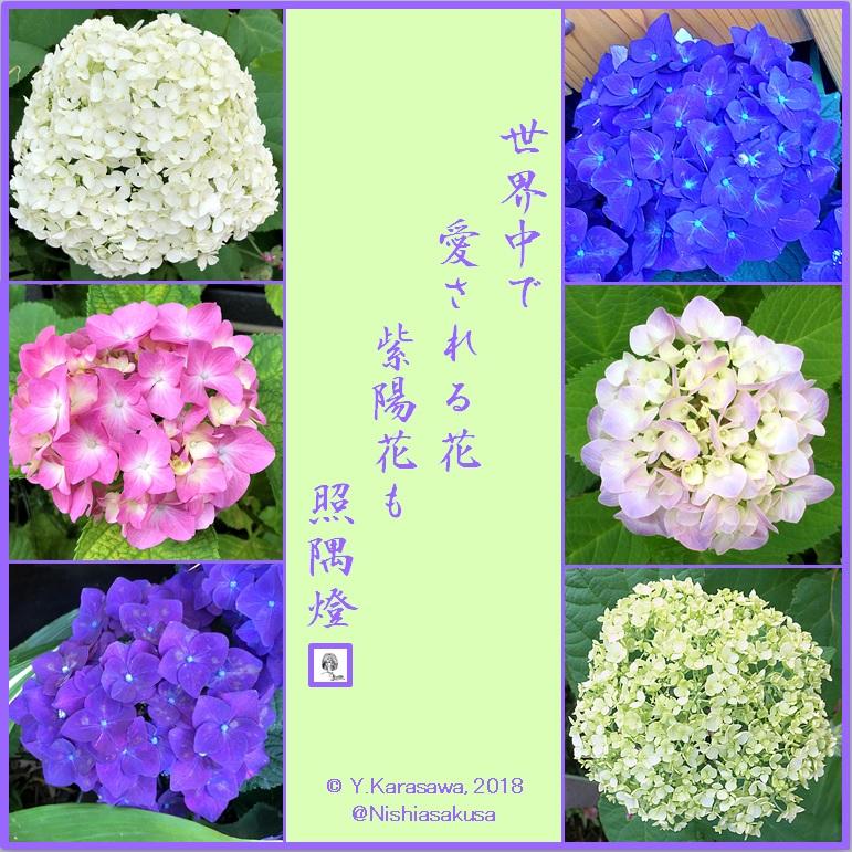 180625紫陽花各種LRG