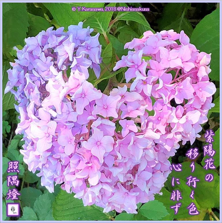 180714ハート形の紫陽花LRG