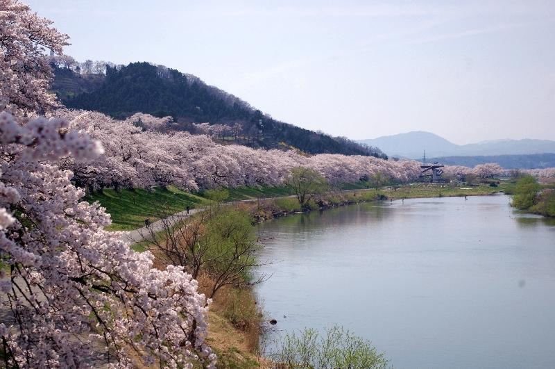 橋からの一目千本桜
