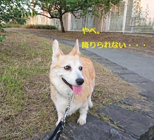 DSC_8953[1]