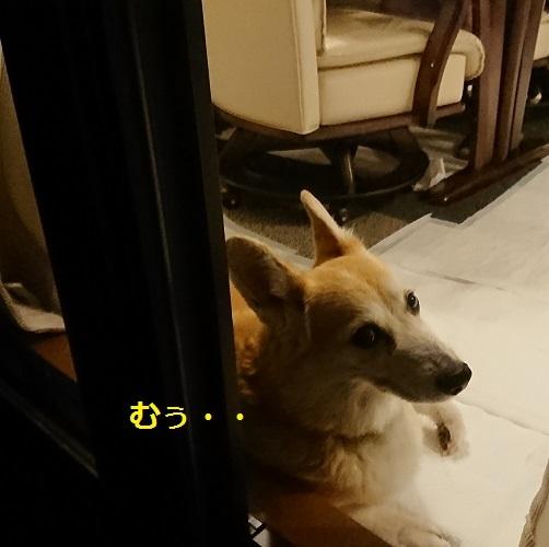 DSC_9166[1]