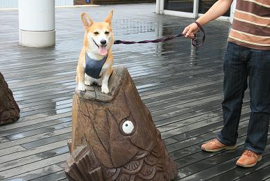 鯉?海に鯉?違うよな、、でもじゃーなんだこれ?