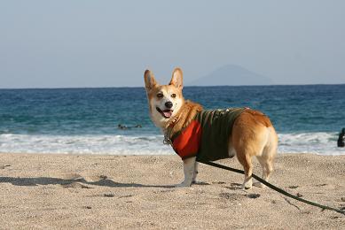 砂浜ふたたびっ!