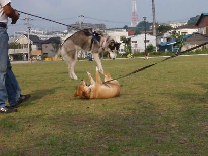 見事な飛躍!