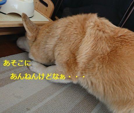 DSC_9399[1]