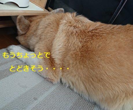 DSC_9400[1]