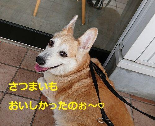 DSC_0669[1]