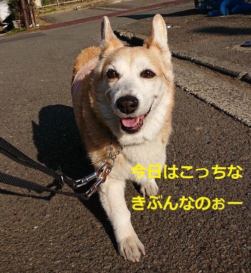 DSC_4379[1]